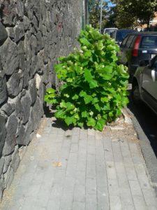 Via Calastro 4