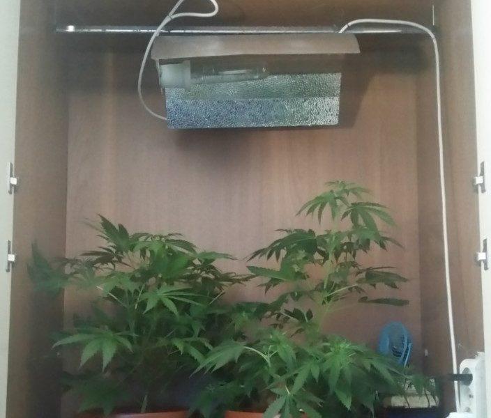Vomero piante di marijuana in camera da letto denunciato - Piante camera da letto ...