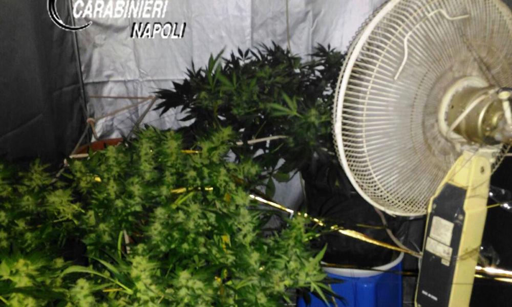 Napoli. Coltivavano cannabis in casa, arrestati due studenti fuori sede